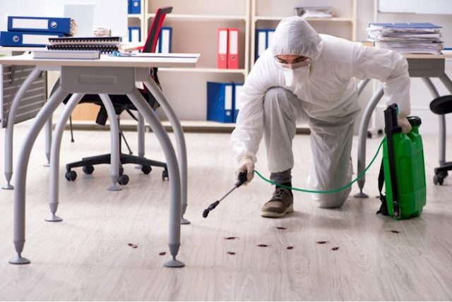 pest controller in a Hertfordshire business property