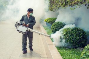 outstanding moth extermination Rapid Professional Service