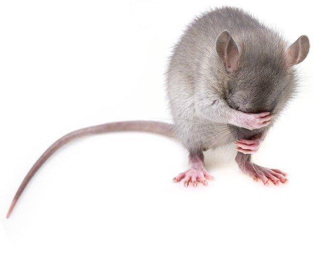 mice cause problems