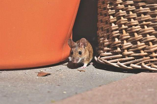 mouse by basket