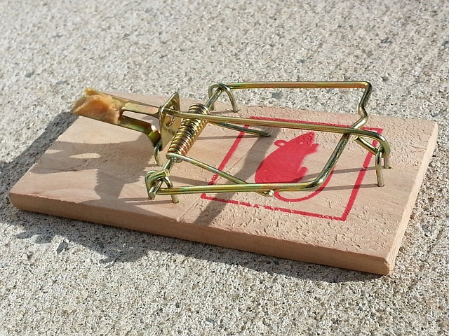 mouse trap laying