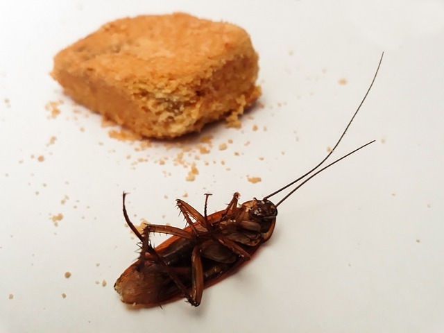 cockroach and food