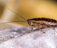 cockroach on rock