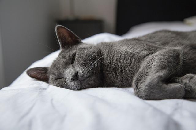 pet bed bugs